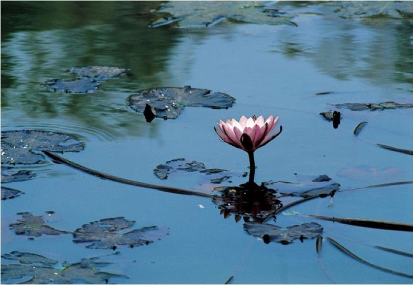 Giornata per ritrovare l'Unità – Il fiore e l'acqua